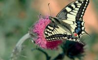 591 - Quand les papillons battent de l'aile
